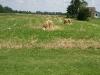 Ohio farm field
